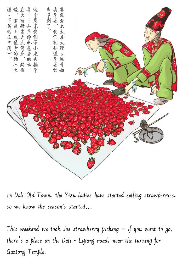 jason_pym-strawberries_01