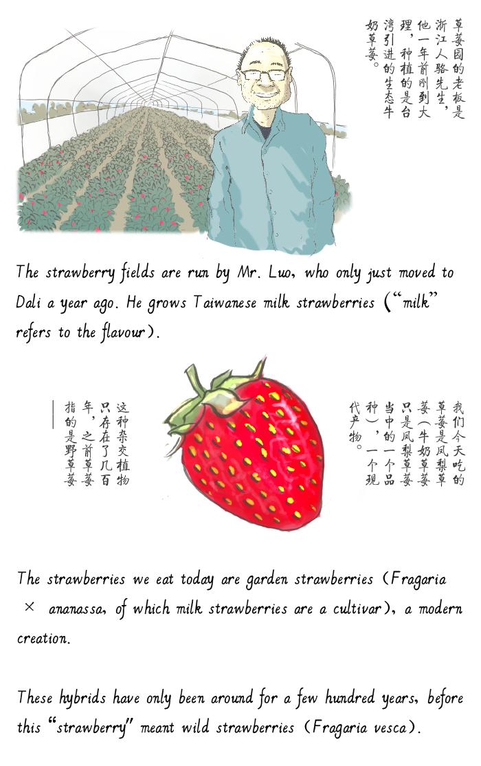 jason_pym-strawberries_02