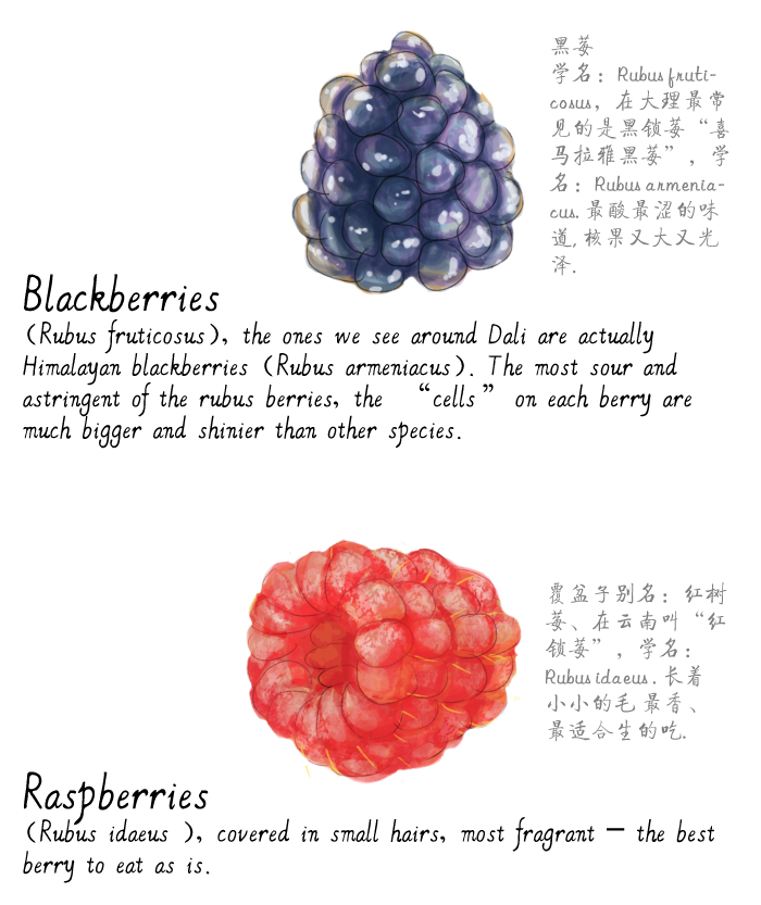 jason_pym-raspberries10