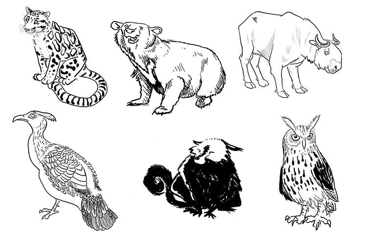 09_animals
